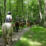 Group beginning wooded portion of Mountain Creek ride