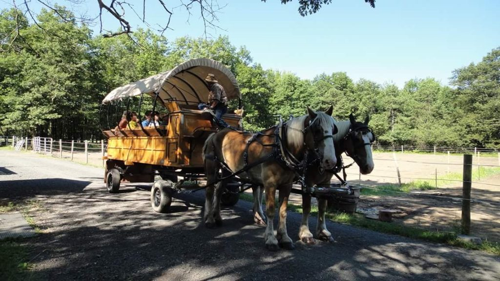 Poconos Family Getaway: Ranch at Pocono Manor Wagon with two horses