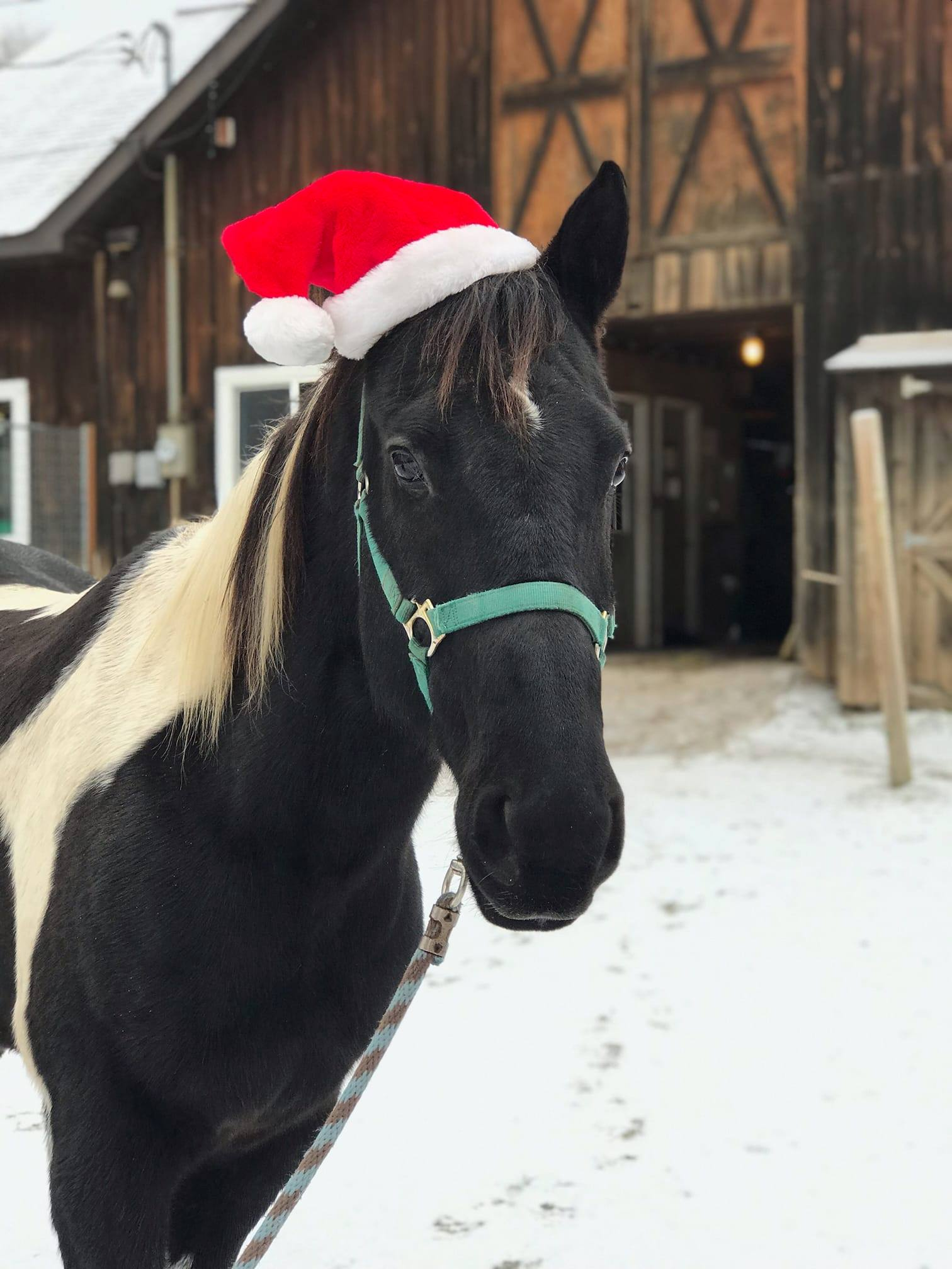 A Horse in a Santa hat infront of the barn
