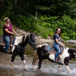 Guided Horseback Riding for Beginners